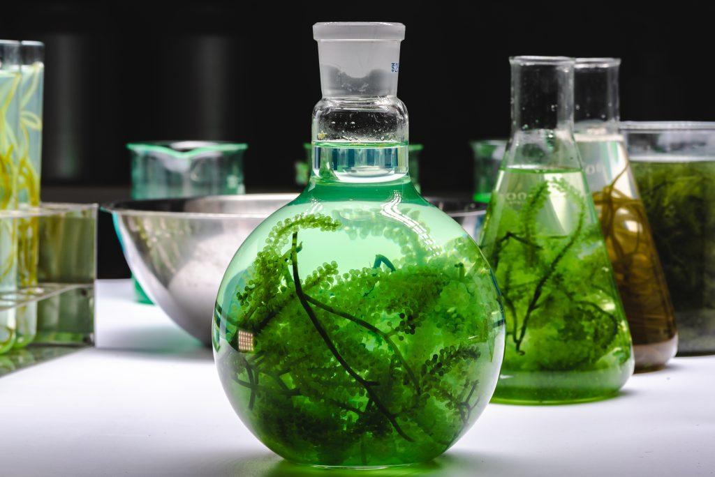 Green Liquid Algae